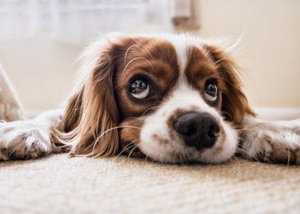 כמה עולה קורס ספרות כלבים
